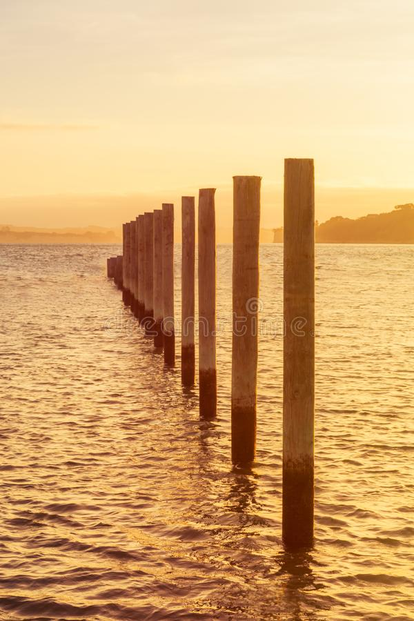 Golden hour over Gulf Harbour marine. Mooring poles lined up towards horizon royalty free stock photo