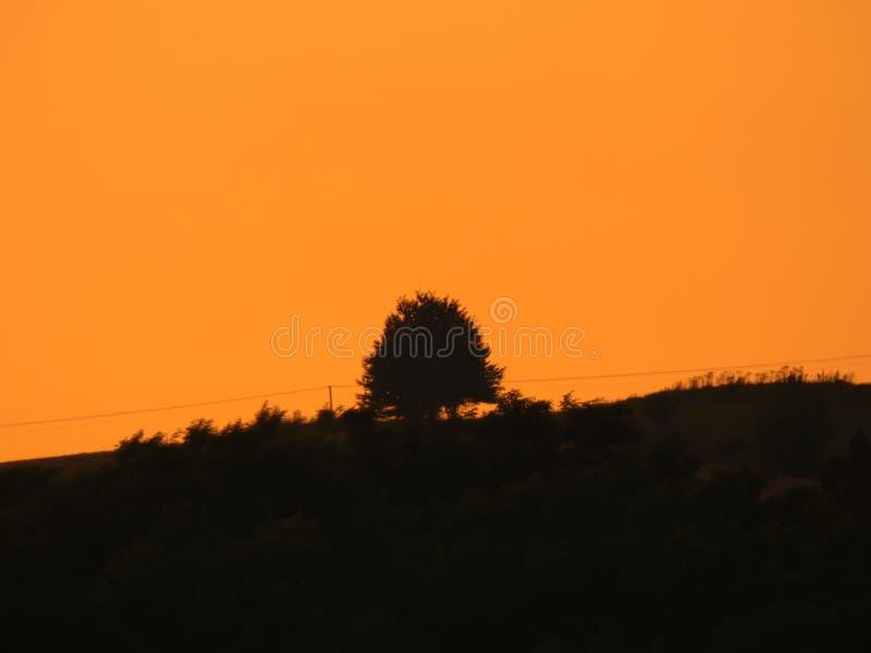 Golden Hour Tree. Dusk, dawn Scenery royalty free stock photo