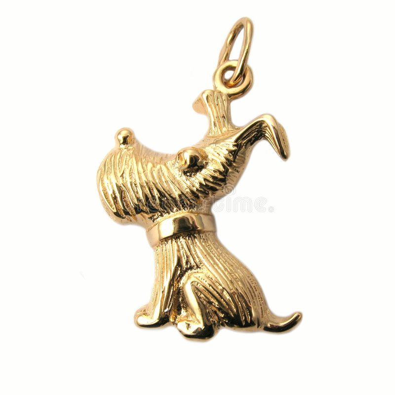 Golden jewelry dog stock photography