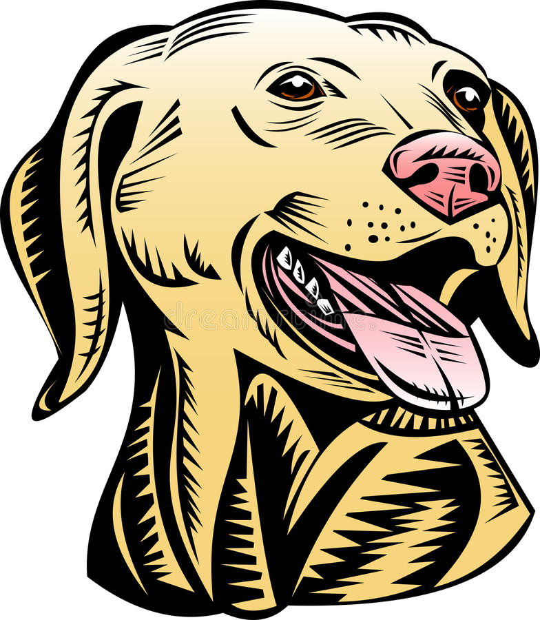 Download Golden labrador retriever stock illustration. Illustration of image - 10264673