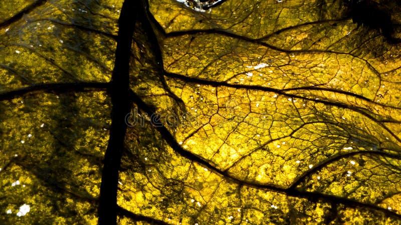 Golden leaf background stock photos
