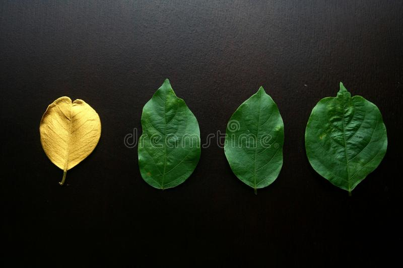Golden leaf and three ordinary green leaves. Photo of a Golden leaf and three ordinary green leaves royalty free stock images