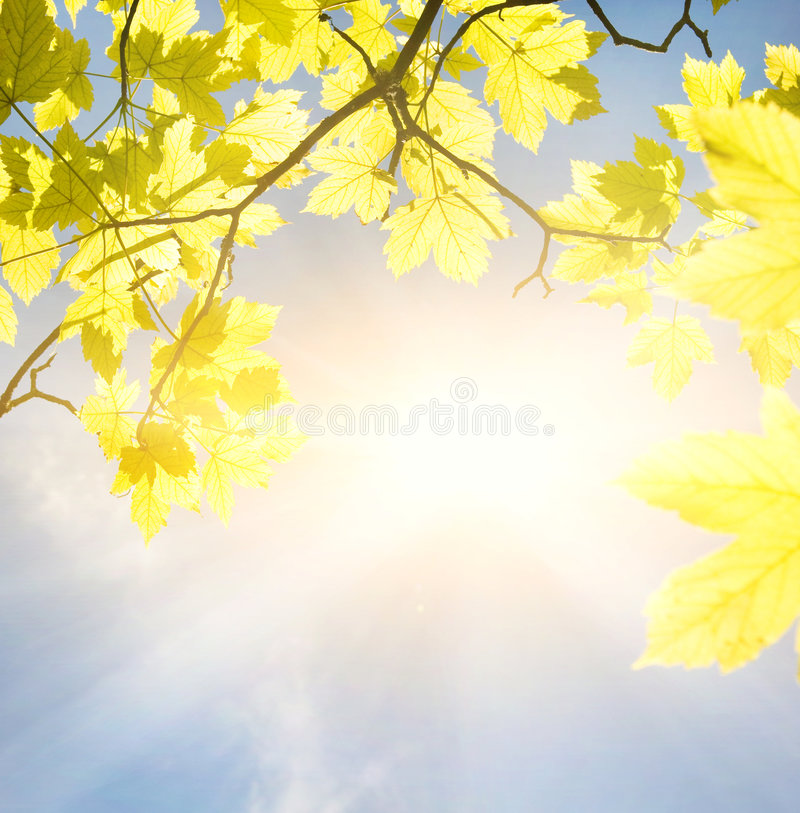 Golden leaves stock photography