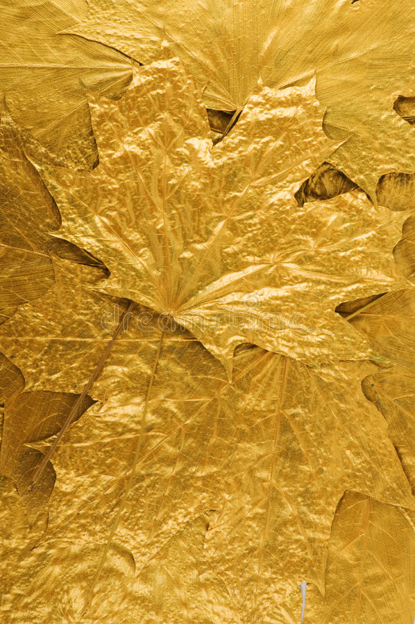 Free Golden Leaves Background Stock Images - 10942264