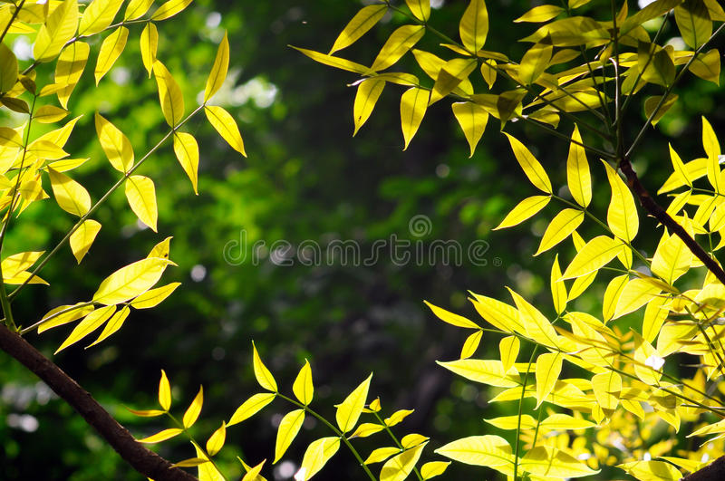 Sun shine to leaves stock photography
