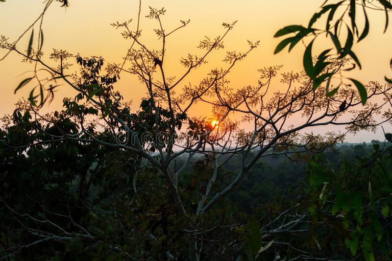 Golden light of the sun behind the branches of a tree surrounded by Green trees and Green Leaves in Indian village tourist spot. Red sunlight, sunset, sundown royalty free stock photos