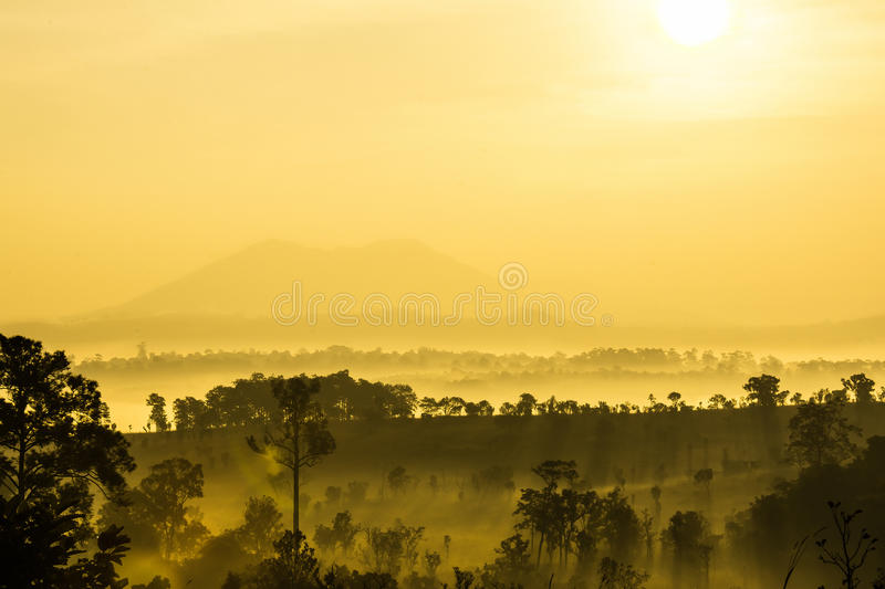 Golden light royalty free stock photography