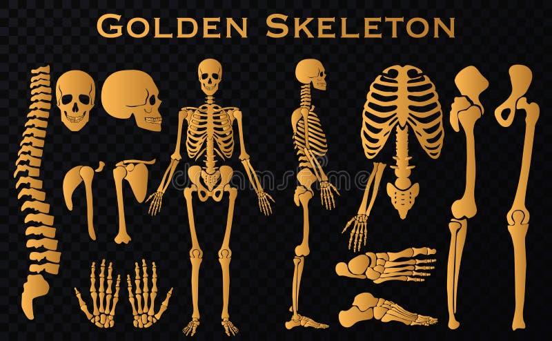 Golden luxury human bones skeleton silhouette collection set. vector illustration