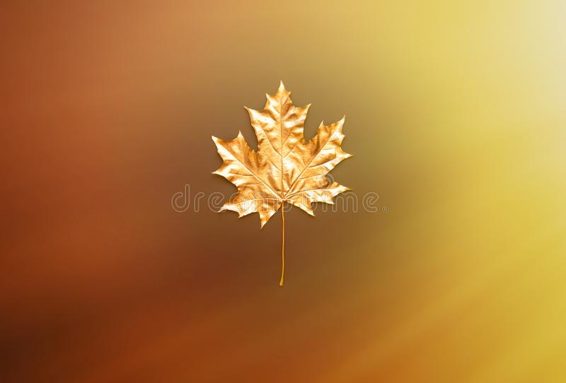 Golden maple leaf on a colorful background. The concept of minimalism. Flat lay, top view royalty free stock image