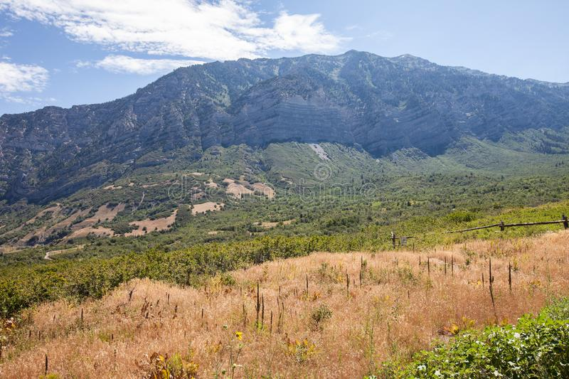 American Fork Canyon golden meadow royalty free stock photography