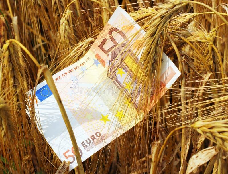 Golden money stock photos