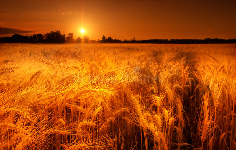 Golden morning stock images