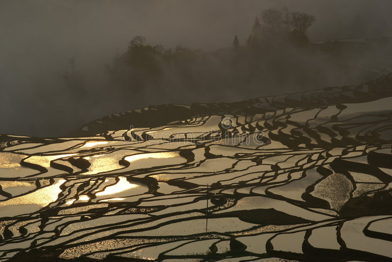 The Golden Paddy Field. The morning Shot of a hill paddy field with the golden light reflection of the sunrise. Taken in Yunan, China royalty free stock photo