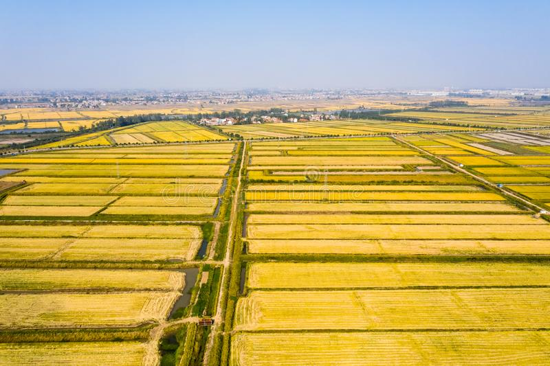 Golden paddy field in autumn. Aerial view of golden paddy field in autumn stock photos