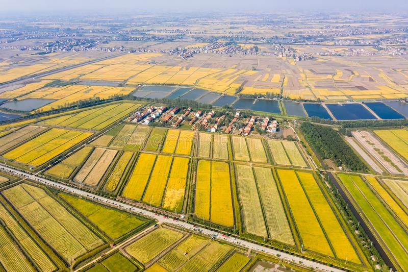 Golden paddy field in autumn. Aerial view of golden paddy field in autumn stock photography
