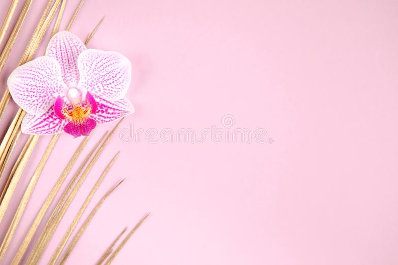Golden palm leaf and orchid flower on pink background stock photo
