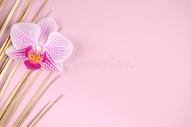 Golden palm leaf and orchid flower on pink background stock photos
