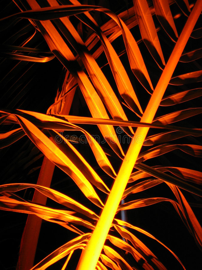 Free Golden Palms Royalty Free Stock Images - 1617569