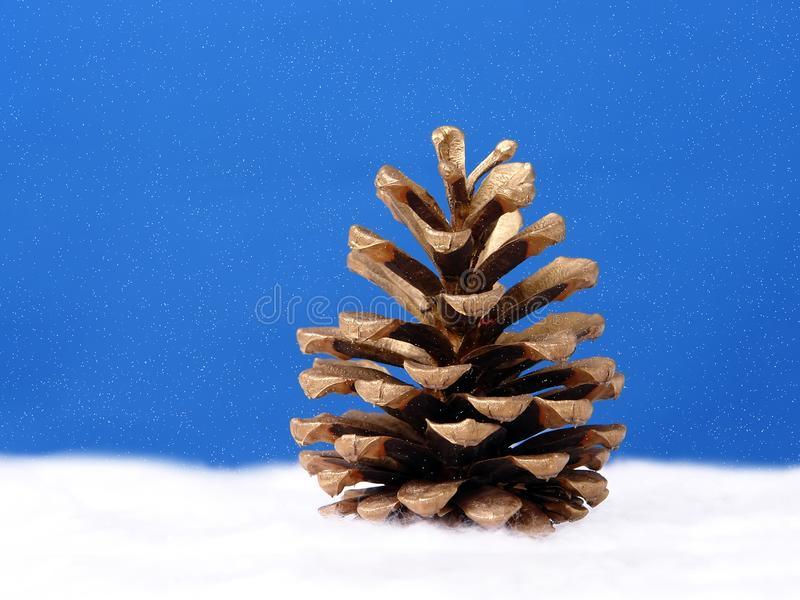 Golden pine cone stock photography