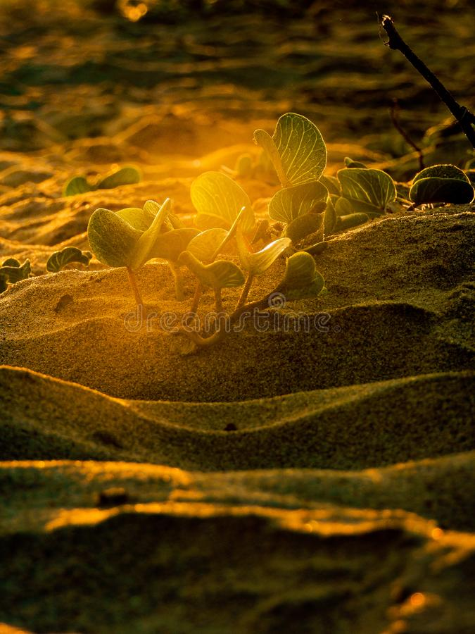 Golden plants on beach royalty free stock photography