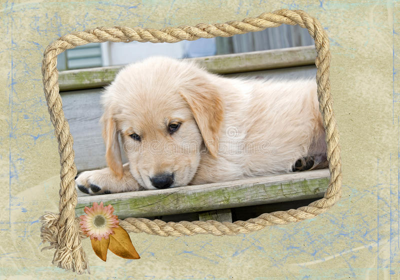Download Golden Puppy stock illustration. Image of frayed, rope - 16088512