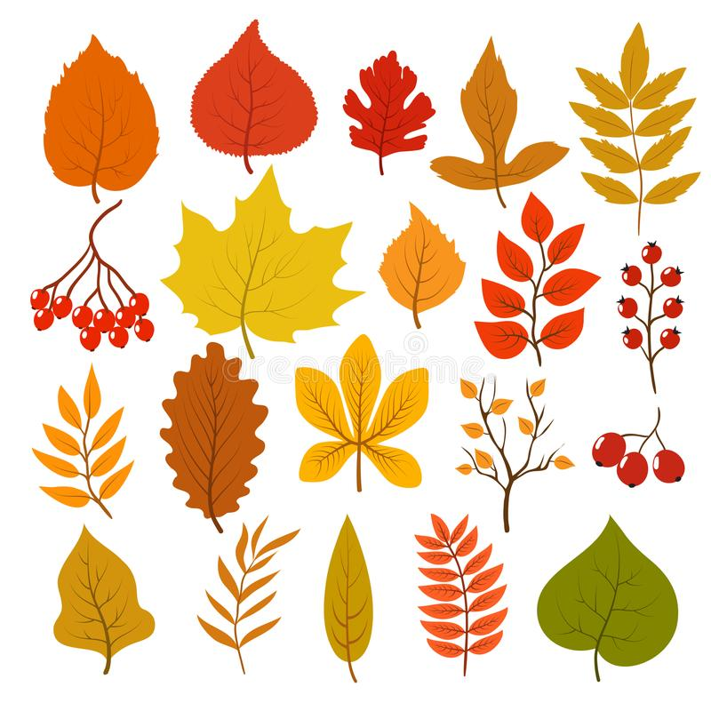 Golden and red autumn leaves, brunches and berries. Fall leaf vector cartoon collection isolated on white background. Illustration of orange maple nature royalty free illustration