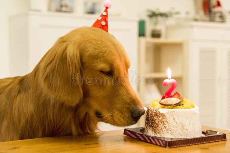 Magnificent Golden Retriever Birthday Cake Stock Photos Download 33 Royalty Funny Birthday Cards Online Alyptdamsfinfo