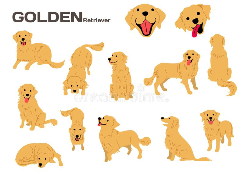 Golden retriever, cane nell'azione, cane felice illustrazione vettoriale