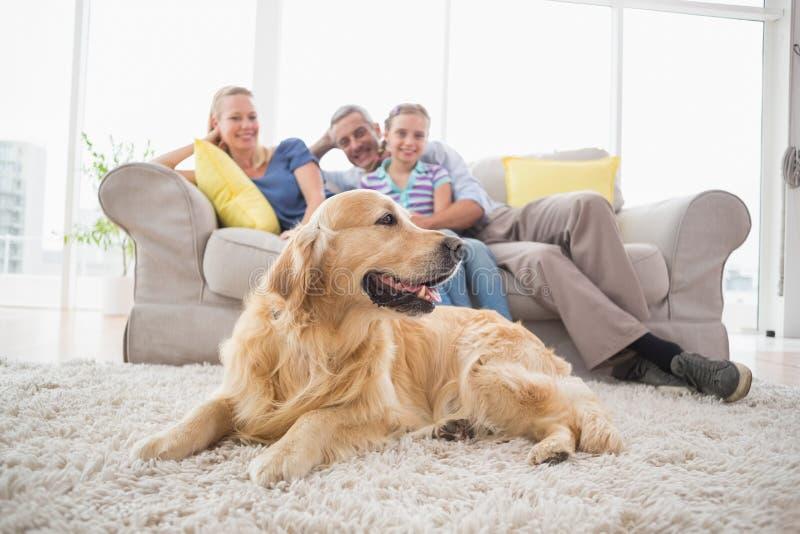 Golden retriever con la famiglia a casa fotografia stock libera da diritti