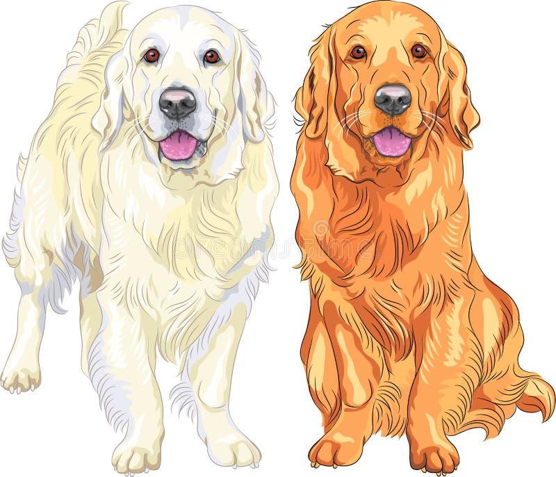 Golden retriever da raça do cão do vetor dois ilustração royalty free