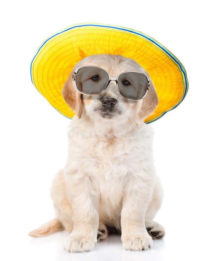 golden retriever del perrito en las gafas de sol y el sombrero que miran la cámara Aislado en el fondo blanco imagen de archivo libre de regalías