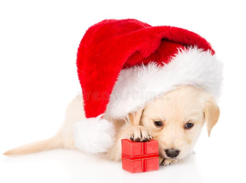 Golden retriever-Hündchen mit Geschenk und Sankt-Hut Getrennt stockfoto