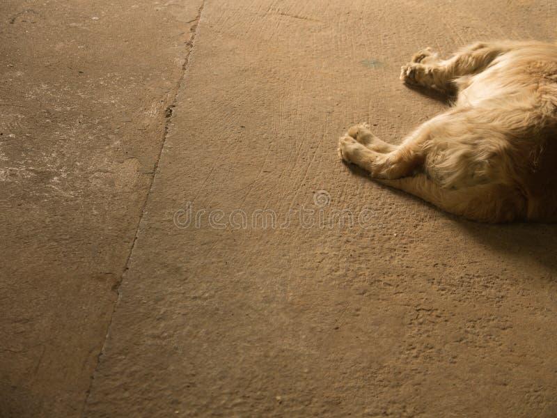 Golden retriever-Hundelügen stockfoto
