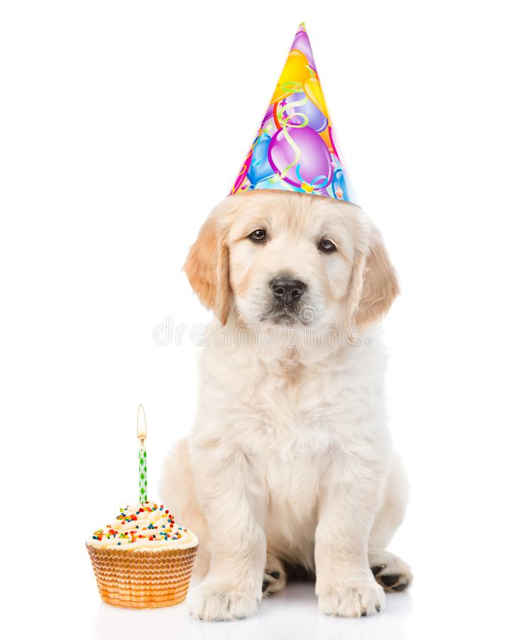 Golden retriever puppy in birthday hat with cake looking at camera. isolated on white background.  stock photos