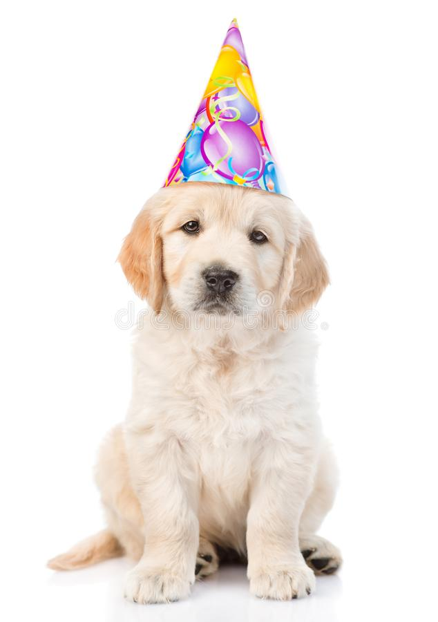 Golden retriever puppy in birthday hat looking at camera. isolated. On white background royalty free stock photos