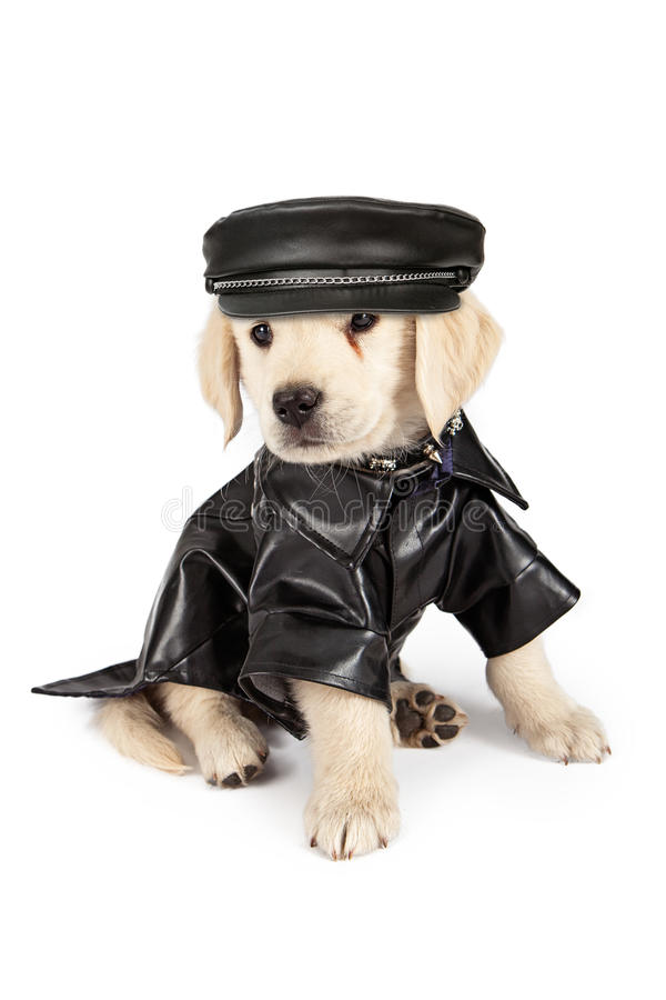 Golden Retriever szczeniaka Bad pies fotografia stock
