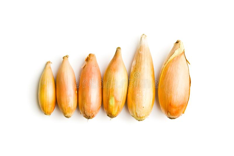 The golden shallot onion royalty free stock images