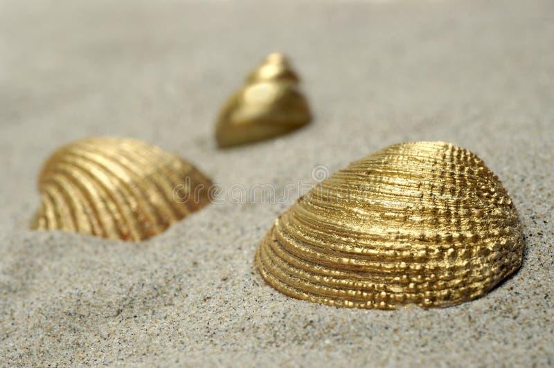 Golden Shells royalty free stock photos