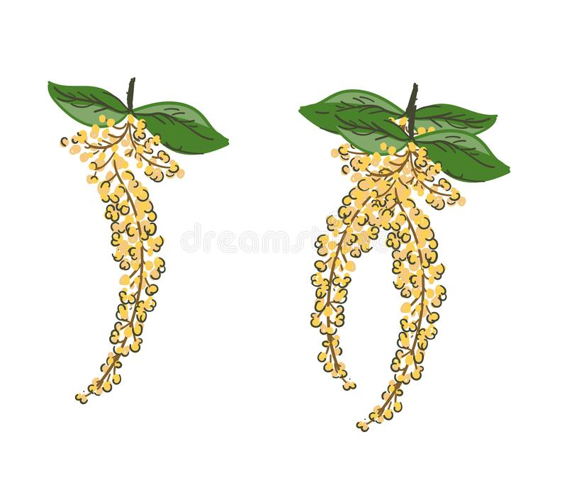 Golden Shower Tree vector.Thailand flower painting.Cassia fistula tropical flower. vector illustration