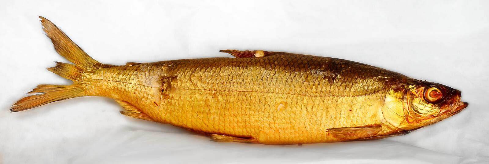 A golden smoked herring on white stock image image of for Smoked herring fish