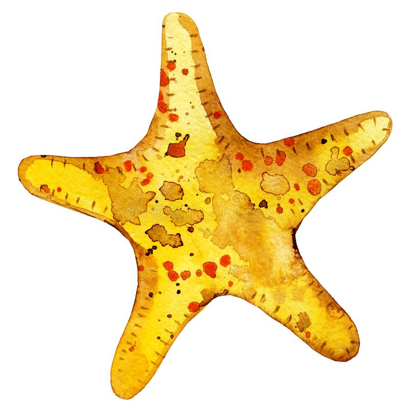 Gold yellow starfish royalty free stock images