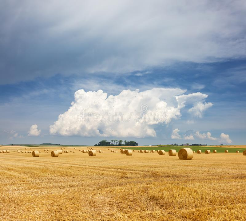 Golden straw bales of hay in the stubble field, agricultural field under a blue sky with clouds royalty free stock images