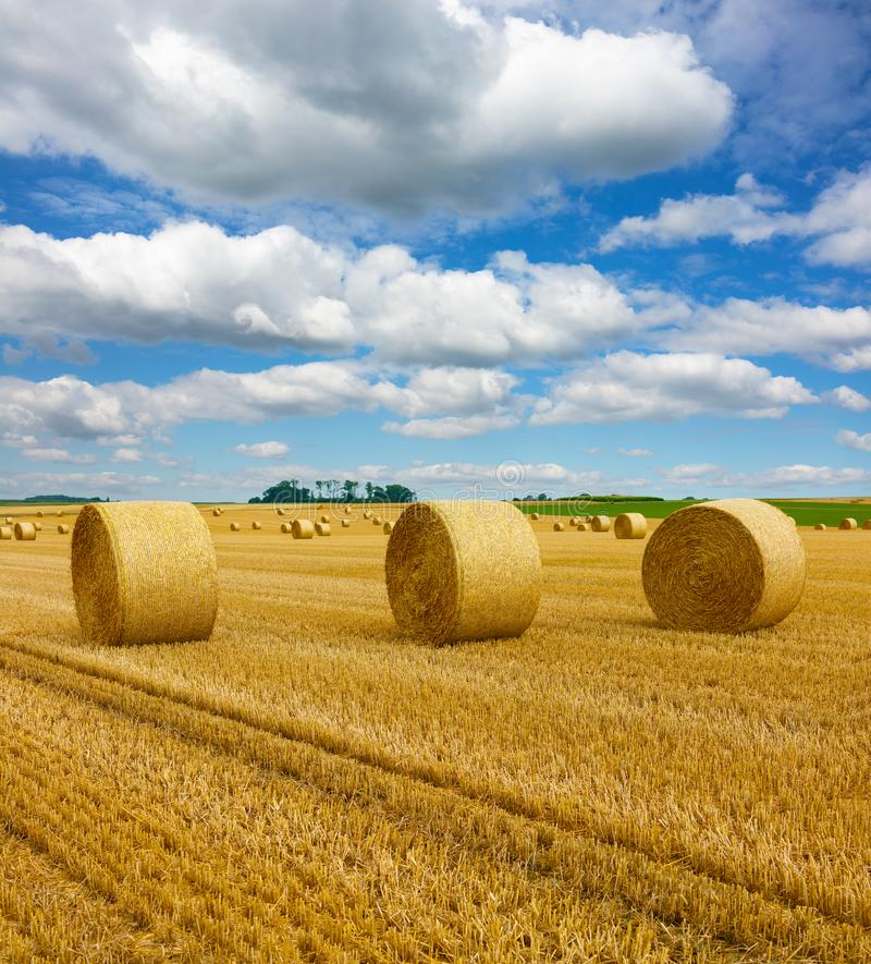Free Golden Straw Bales Of Hay In The Stubble Field, Agricultural Field Under A Blue Sky With Clouds Stock Photos - 162069383