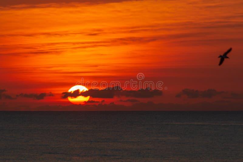 A golden sun rising above the Atlantic Ocean on Delray Beach, Florida. A golden sun rises with a seagull flying above the Atlantic Ocean on Delray Beach royalty free stock photos