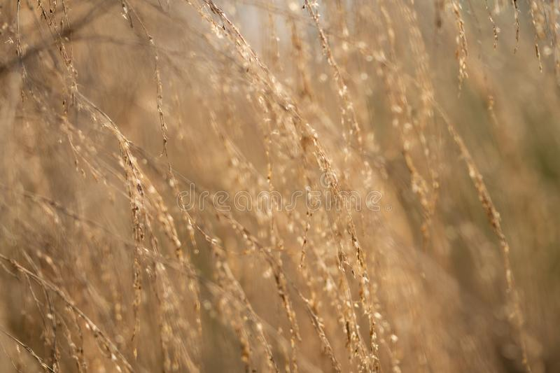Golden sunlight cast on a nature background in the morning. In a meadow stock image