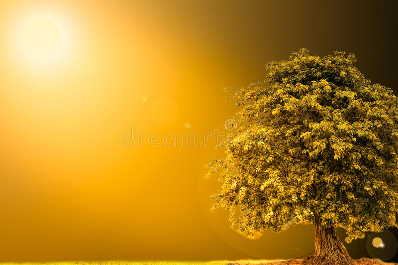 Golden sunlight landscape with tree royalty free stock image