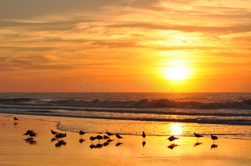 Golden sunrise over the beach and crashing waves stock photography