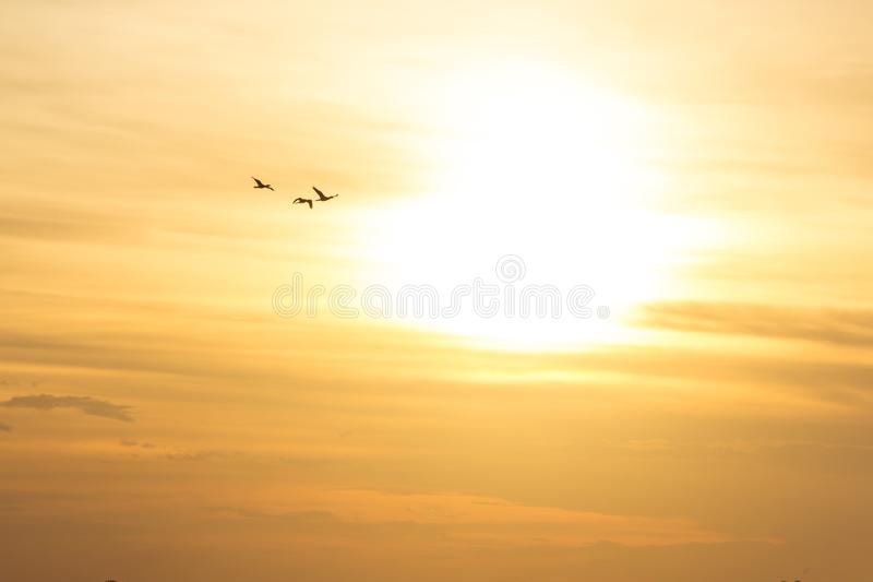 Golden Sunset in Brazil with three birds on the sky. This in one of the best sunsets in brazil. This is the city of Porto Alegre with three birds on the sky stock photos
