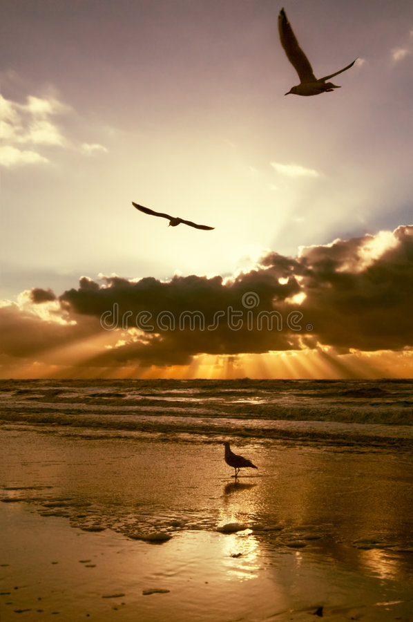 Download Golden sunset colors stock image. Image of nature, orange - 802841