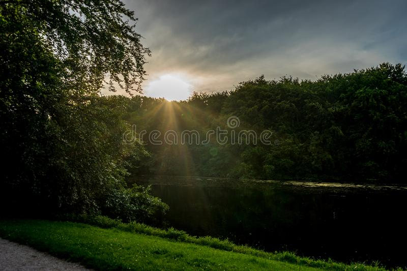 Golden sunset in Haagse Bos, forest in The Hague stock image